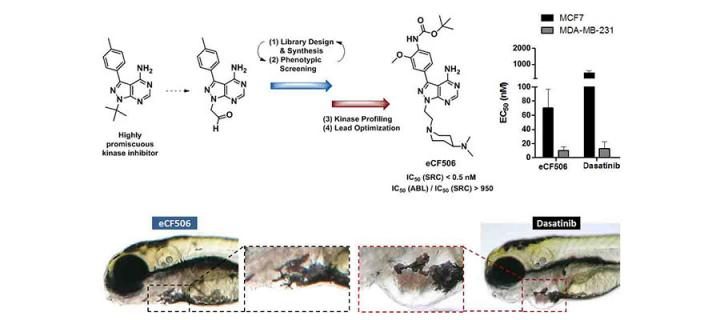 ECRC scientists develop new Src inhibitor with unique properties