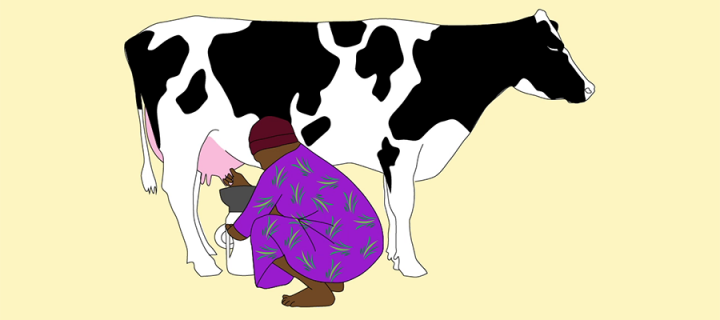 Person hand milking a dairy cow