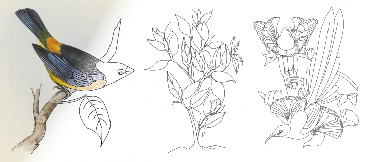 Illustration of some birds and plants being coloured in with pencils