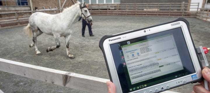 Horse and pad