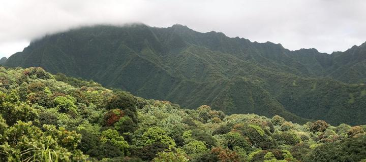 Fatuiva rainforest