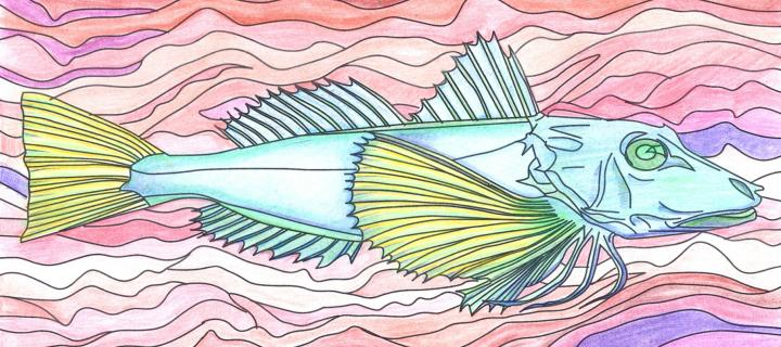 Illustration of a fish being coloured in with pencils