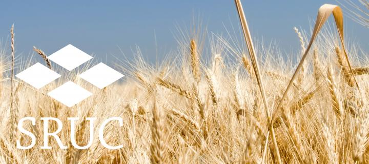 Wheat field with SRUC logo
