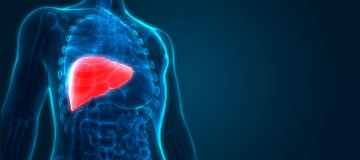 Cell discovery could aid liver disease patients