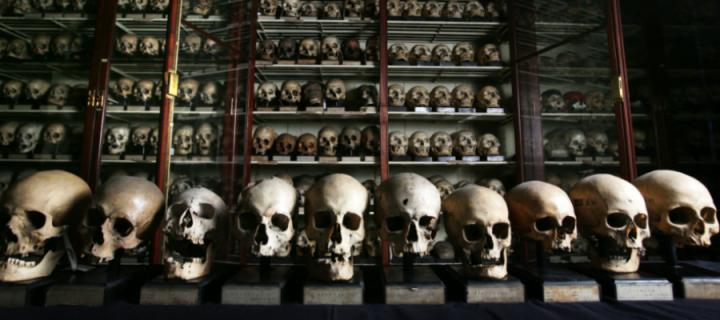A collection of Guanche skulls displayed in the University's Anatomical Museum