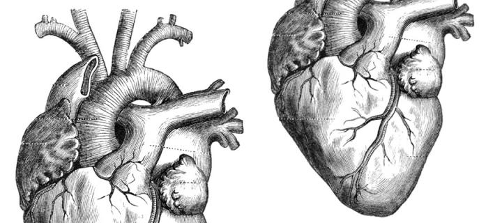 Top and bottom images of the heart
