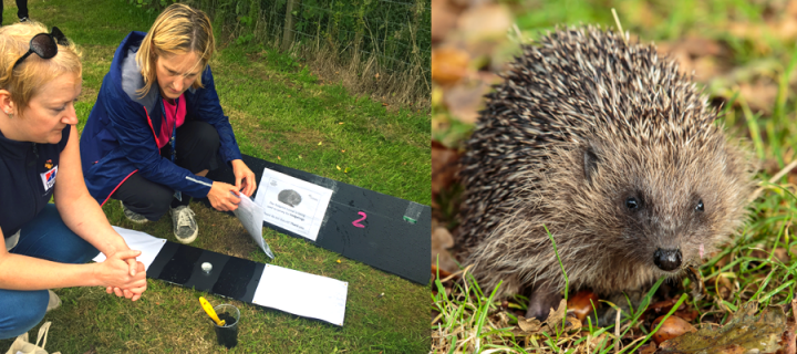 Campus to create wildlife haven for hedgehogs