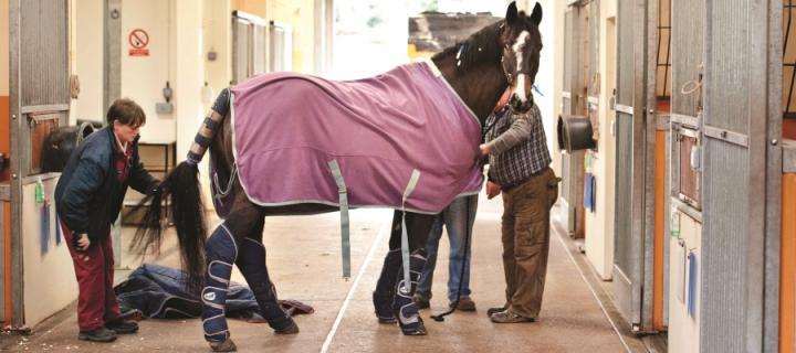 Horse equine hospital