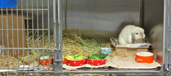 Hospitalised rabbit