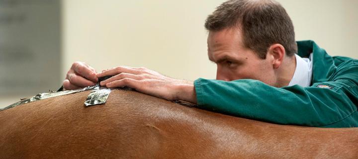 Clinician treating a horse