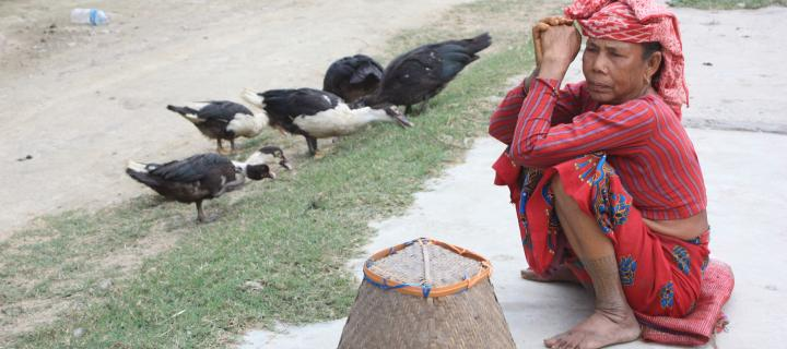 Poultry and woman