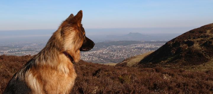 Dog and hills