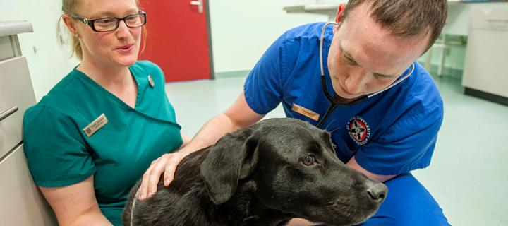 Intern with vet examining a dog