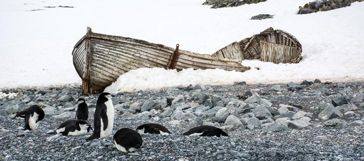 Penguins in the arctic