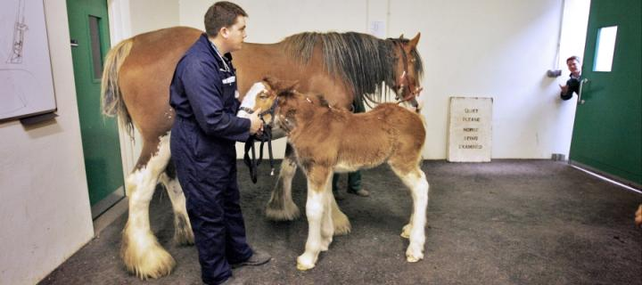 A horse in the equine hospital