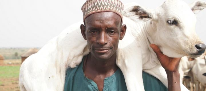 African man with calf over shoulders