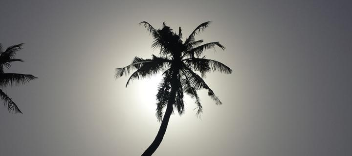Palm tree in Nigeria