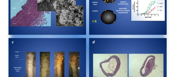 Combination of 4 images outlining the affects and lesions resulting from nanoparticles of air pollution