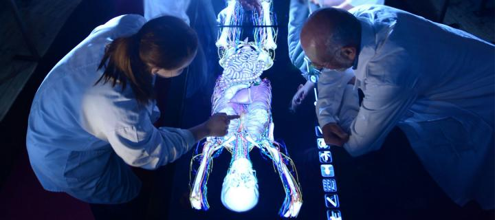 A group of people viewing the digital display of the Virtual Cadaver system