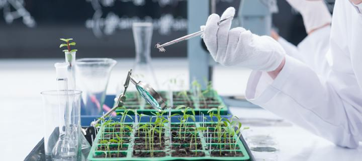 Woman inspecting plant samples in lab