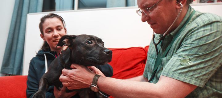 University vet treating dog in homeless hostel