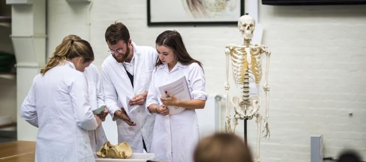 Anatomy students examine bones