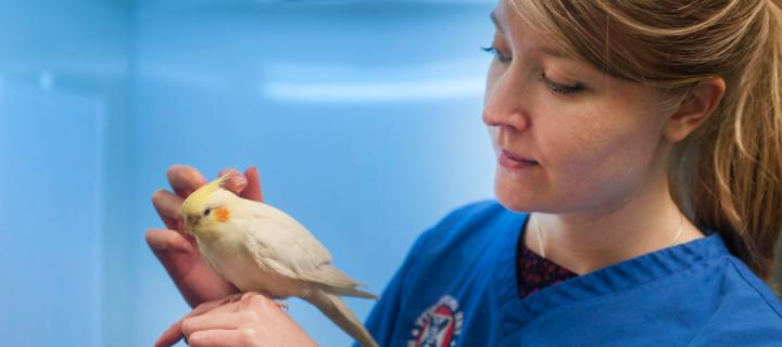 Vet with exotic bird