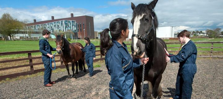Vet students with horses in front of The Roslin Institute
