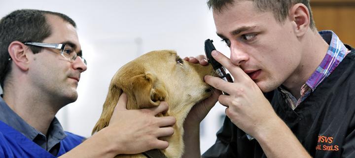 A vet student examining a dog's eyes, with a Vet School tutor supervising