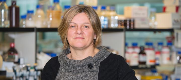 IGMM News 2014 - Wendy Bickmore