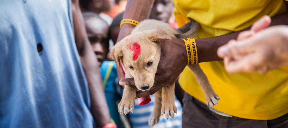 Smartphones fighting rabies in Africa