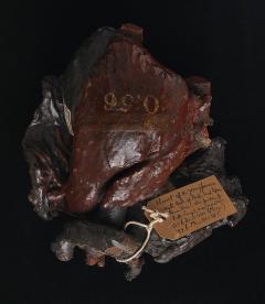 wax cast of a heart