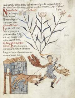Man and dog from BL Harley 5294, f.25