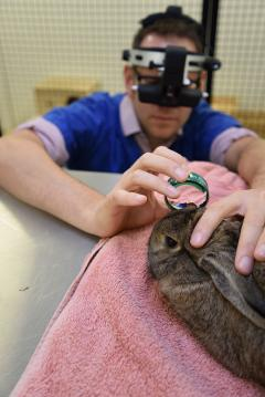 Ben Blacklock Ophthalmogist with rabbit patient