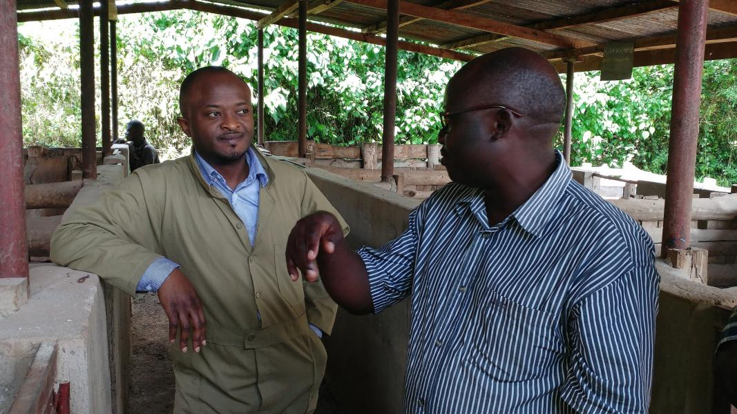 Roslin scientist Dr Adrian Muwonge at an Ugandan pig farm.
